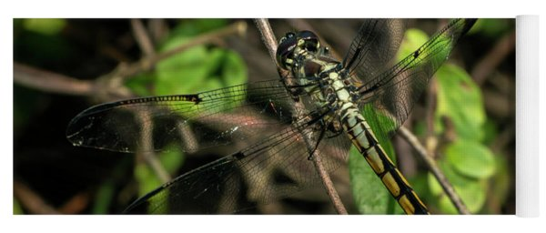 Female Bar-winged Skimmer Yoga Mat
