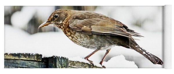 Female Blackbird In The Snow Yoga Mat