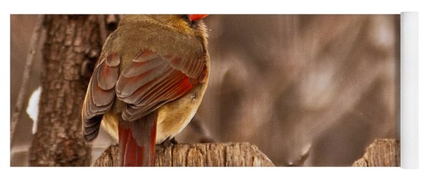 Female Cardinal On The Fence Yoga Mat