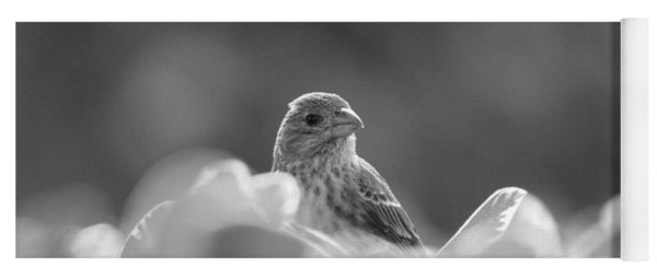Female House Finch Perched In Black And White Yoga Mat