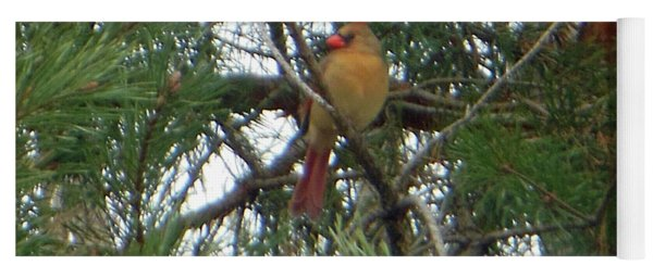Yoga Mat featuring the photograph Female Northern Cardinal by Rockin Docks Deluxephotos
