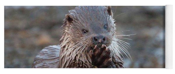 Female Otter Eating Yoga Mat