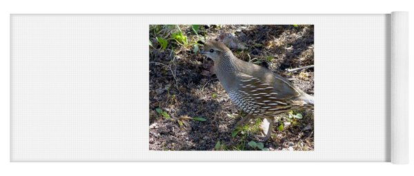 Female Quail Yoga Mat