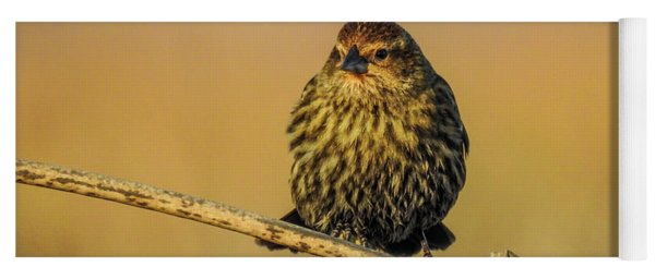 Female Red-winged Blackbird  Yoga Mat