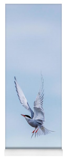Fighting Terns Yoga Mat