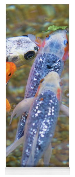 Yoga Mat featuring the photograph Fish Fighting For Food by Raphael Lopez