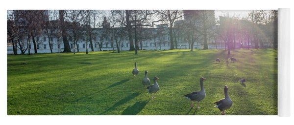 Five Ducks Walking In Line At Sunset With London Museum In The B Yoga Mat