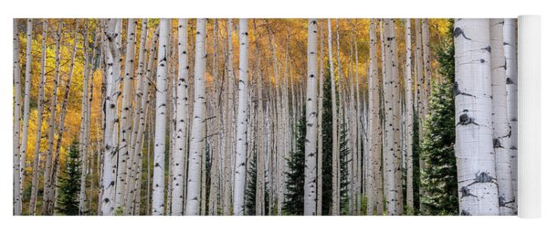 Flaming Aspens - Crested Butte Colorado Yoga Mat