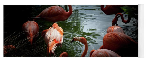 Yoga Mat featuring the photograph Flamingos by Eric Christopher Jackson