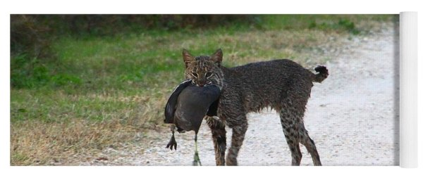 Florida Bobcat Catches An Evening Snack Yoga Mat