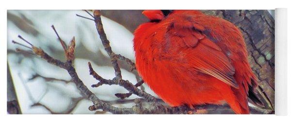 Fluffed Up Male Cardinal Yoga Mat