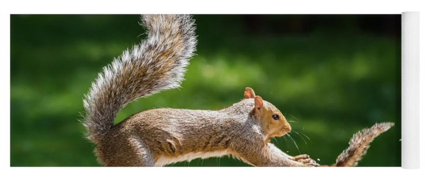 Food Fight Squirrel And Chipmunk Yoga Mat
