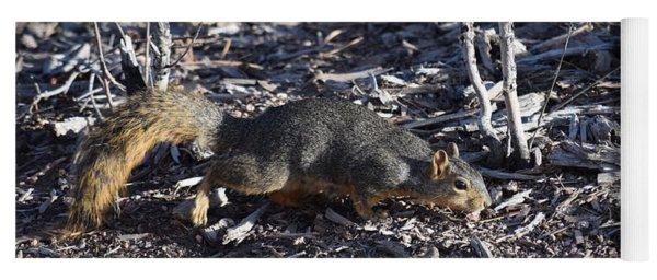 Squirrel Pprh Woodland Park Co Yoga Mat
