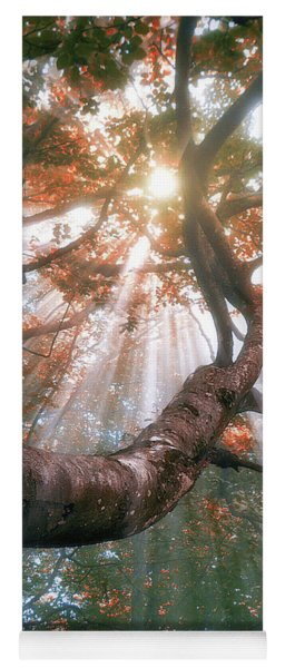 Forest With Fog And Sun Rays Yoga Mat