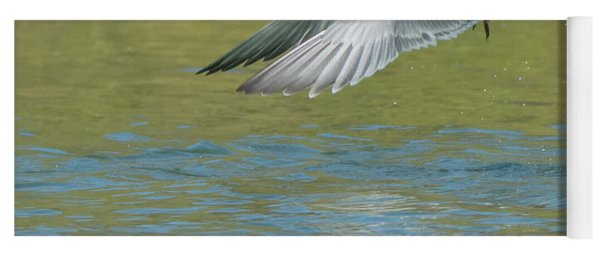 Forster's Tern 5747-092217-2 Yoga Mat