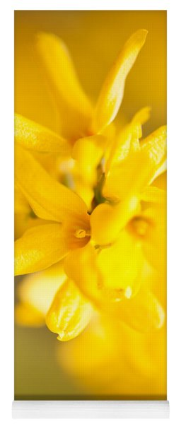 Forsythia Yellow Flowering Plant Yoga Mat