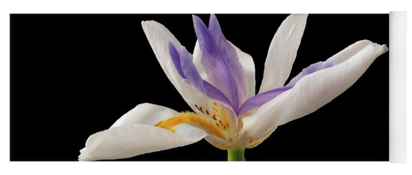 Fortnight Lily On Black Yoga Mat