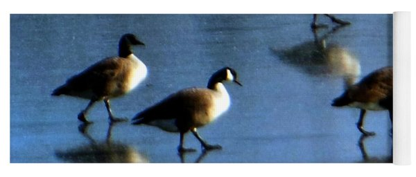 Four Geese Walking On Ice Yoga Mat
