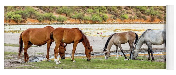 Four Wild Horses Grazing Along Arizona River Yoga Mat