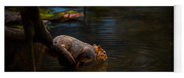 Fox Squirrel Drinking Yoga Mat
