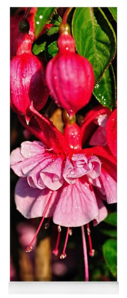 Fuchsias With Droplets Yoga Mat