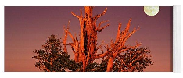 Full Moon Behind Ancient Bristlecone Pine White Mountains California Yoga Mat