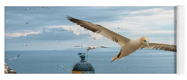 Gannets At Bass Rock Lighthouse Yoga Mat