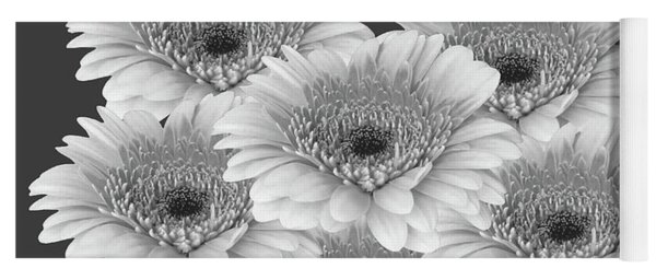 Gerberas Black And White Framed Yoga Mat