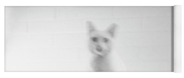 Ghost Cat, With Typewriter Yoga Mat