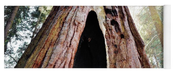 Giant Forest Giant Sequoia Yoga Mat