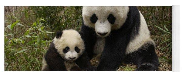 Giant Panda Ailuropoda Melanoleuca Yoga Mat