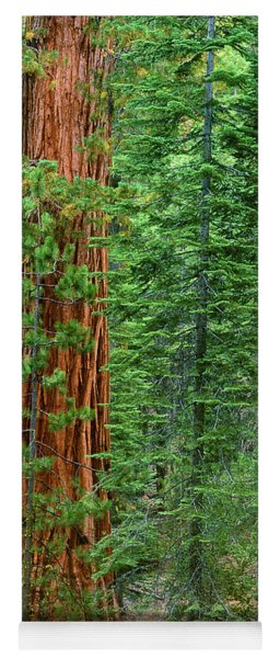 Giant Sequoias Sequoiadendron Gigantium Yosemite Np Ca Yoga Mat