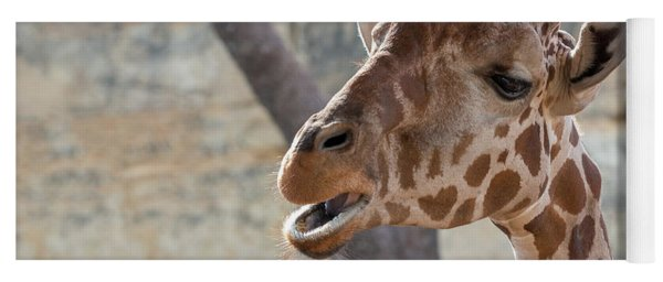Girafe Head About To Grab Food Yoga Mat