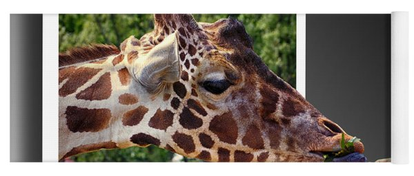 Giraffe Feeding Out Of Frame Yoga Mat