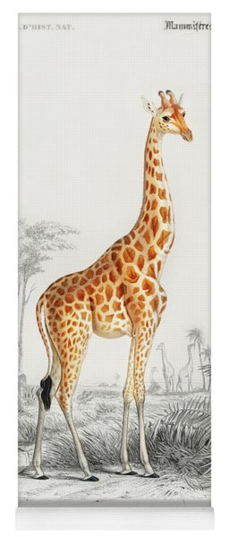 Giraffe - Giraffa Camelopardalis Yoga Mat
