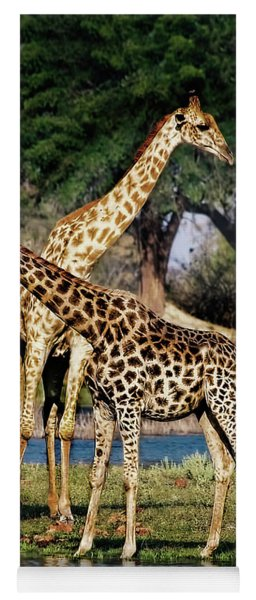 Giraffe Mother And Calf Yoga Mat