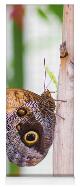 Yoga Mat featuring the photograph Gold And Brown Butterfly by Raphael Lopez