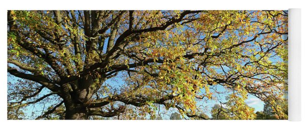 Golden Oak Tree At Bushy Park London Yoga Mat