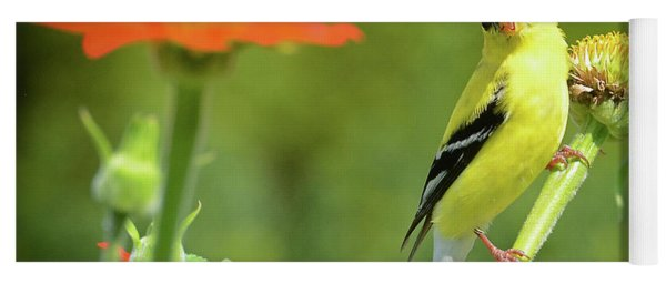 Goldfinch Feeding In A Garden Yoga Mat