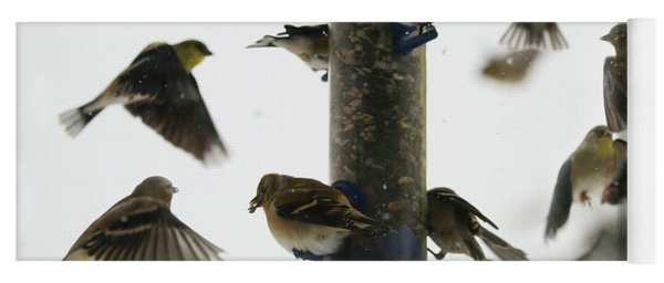 Goldfinch Frenzy Yoga Mat