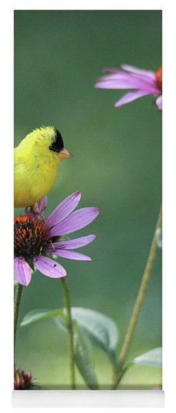 Goldfinch On A Coneflower Yoga Mat