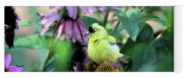 Goldfinch On Coneflowers Yoga Mat