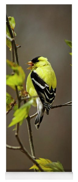 Goldfinch Suspended In Song Yoga Mat