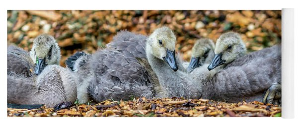 Goslings Yoga Mat