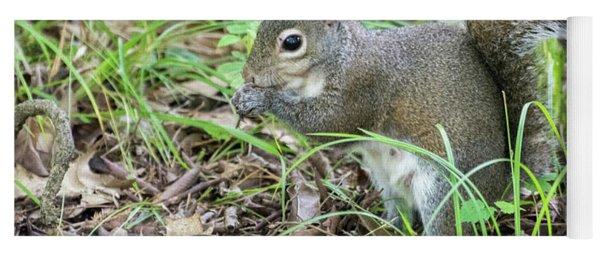 Gray Squirrel Eating Yoga Mat