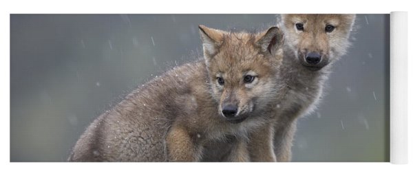 Gray Wolf Canis Lupus Pups In Light Yoga Mat
