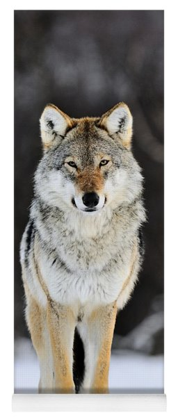 Gray Wolf In The Snow Yoga Mat