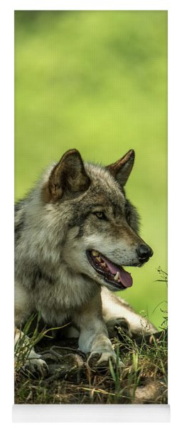Gray Wolf In Shade Yoga Mat