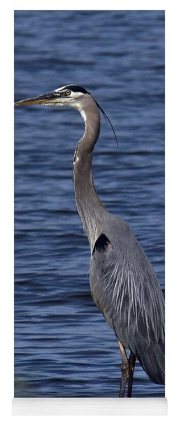 Great Blue Heron Dmsb0001 Yoga Mat