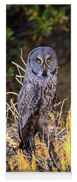 Great Grey Owl Portrait Yoga Mat